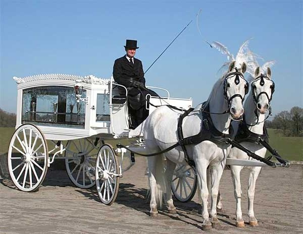 White horses and white Hearse